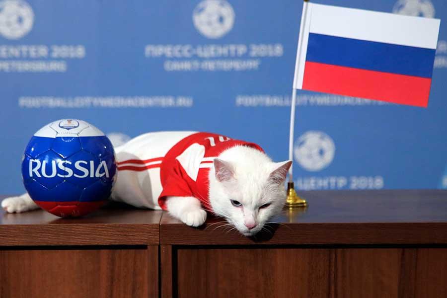 ロシアW杯の公式予言者のアキレス【写真:AP】