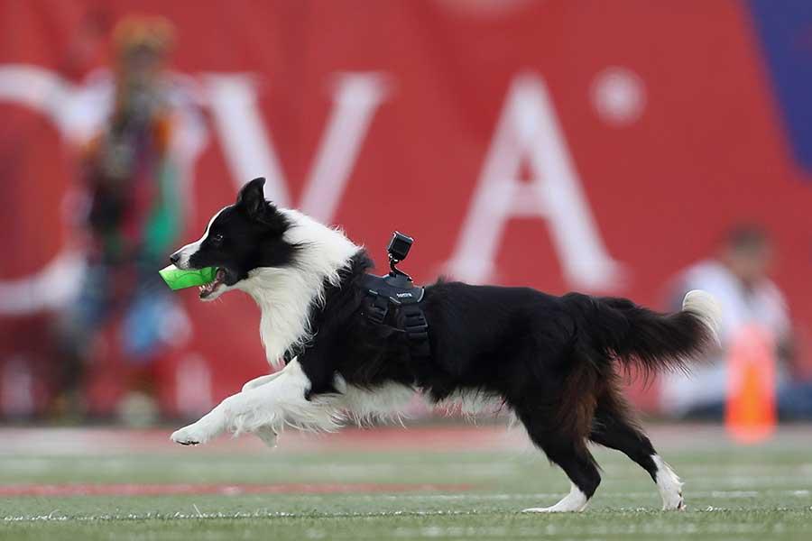 """海外サッカーに登場した規格外の""""守護神""""が話題だ(写真はイメージです)【写真:Getty Images】"""