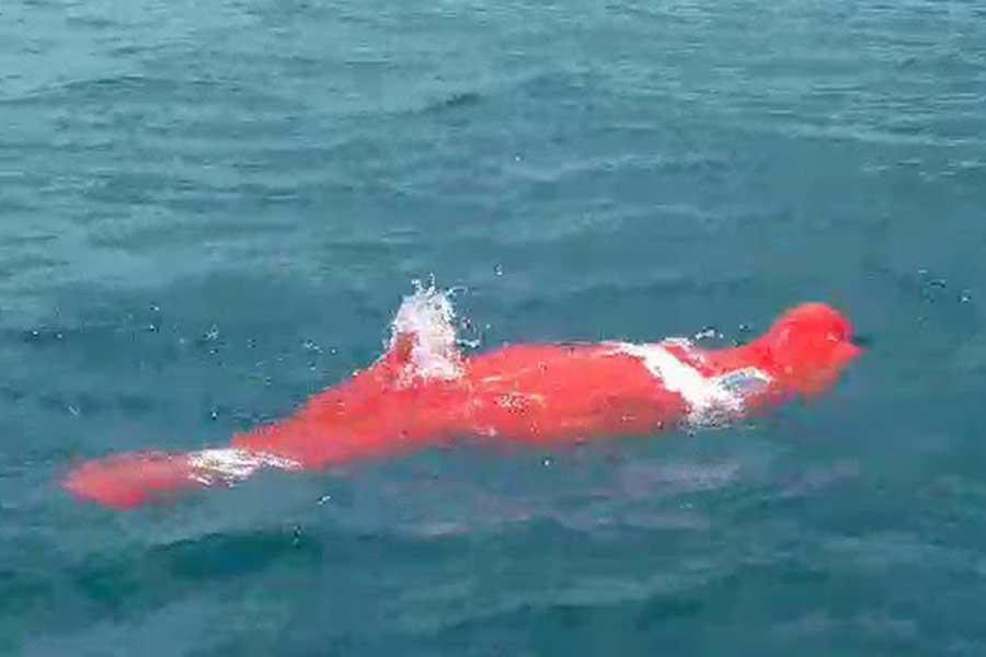 64歳の男性が両手両足を縛られたまま泳ぎ、3380メートルを泳破した(画像はスクリーンショットです)