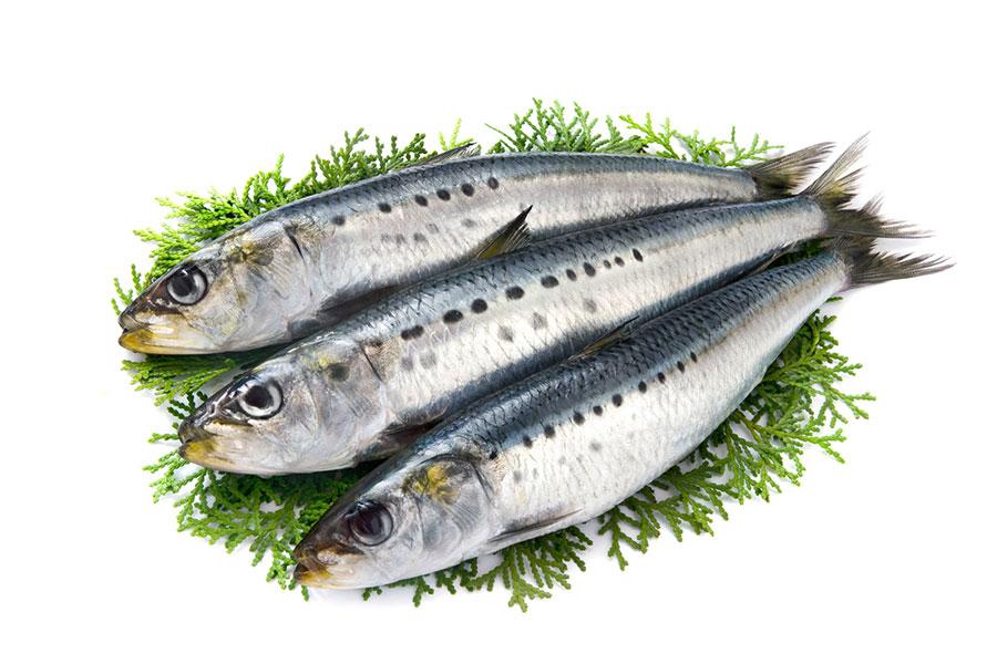 魚の油はスポーツ栄養の世界で注目されている