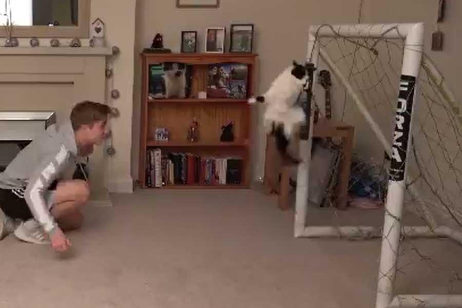 神セーブを連発する猫のゴールキーパーが話題に(写真はクリス・ディクソン氏のツイッターより)