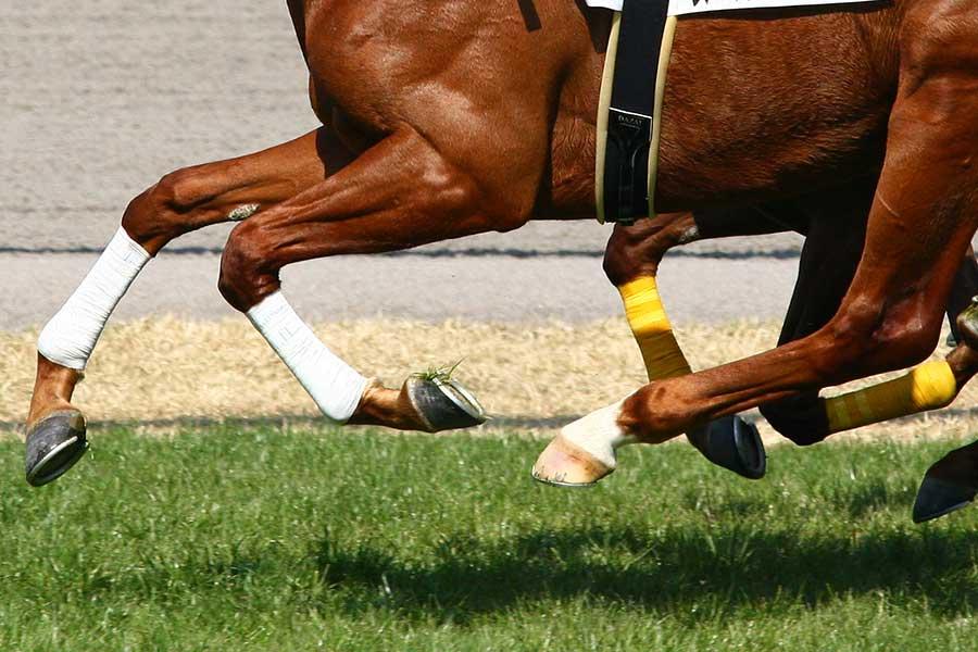 英国の競馬で起きた超スローペースが話題を呼んでいる(写真はイメージです)