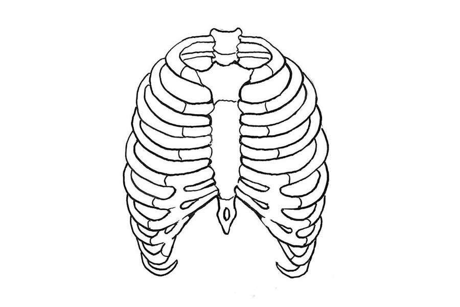 大人の心臓は胸郭で守られているが、子どもの胸郭は未完成【写真提供:スポーツ安全指導推進機構】
