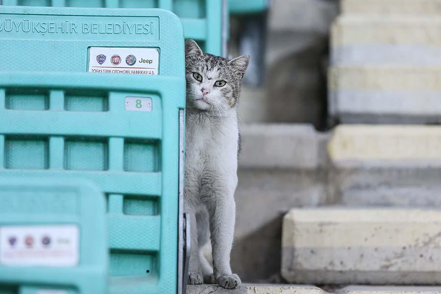 米大学アメフトの試合で起きた観客のネコ救出劇が話題を呼んでいる(写真はイメージです)【写真:Getty Images】